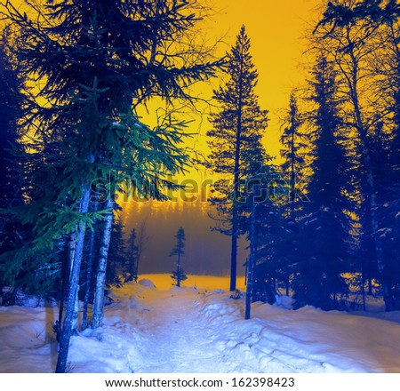 night in winter forest - stock photo