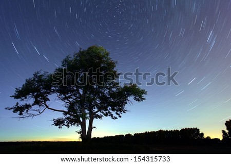 Night lonely tree falling stars - stock photo