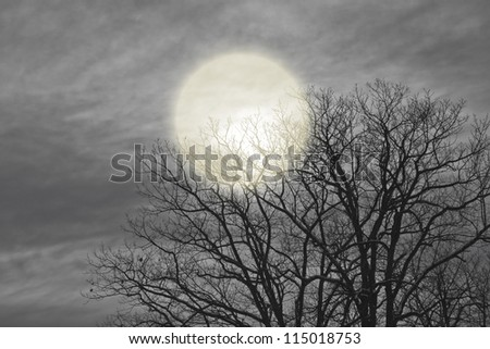 night moon shines through the clouds and trees. - stock photo
