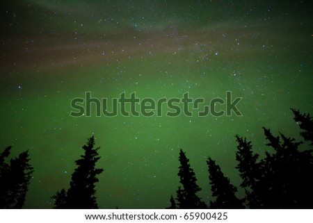 Night sky with lots of stars and northern lights (Aurora borealis) above tree tops. - stock photo