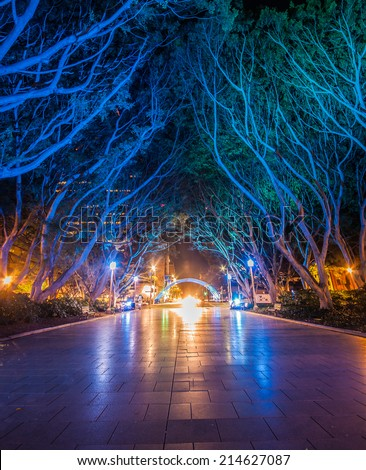 night tree tunnel - stock photo