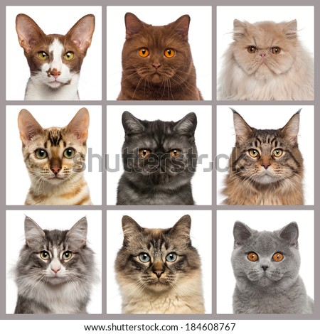 Nine cat heads looking at the camera - stock photo