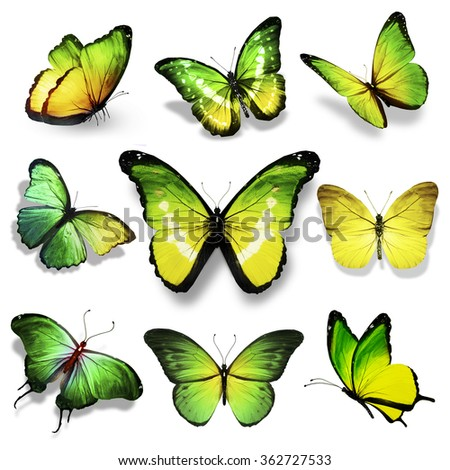 Nine green yellow butterflies on white background - stock photo
