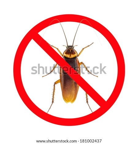 No More Cockroach icon isolated on white background - stock photo