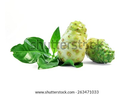 Noni fruit,Herbal for healthy. - stock photo