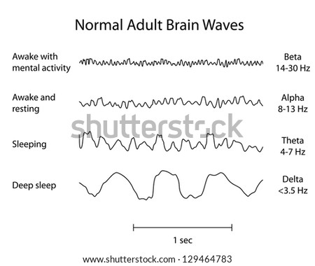 Normal Brain Waves EEG - stock photo