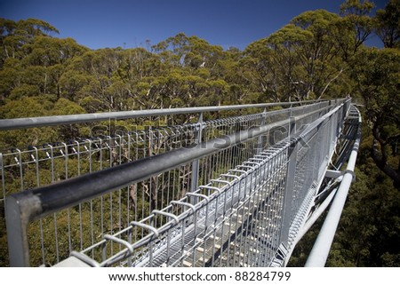 Nornalup treetop walk on giant trees, Western Australia. - stock photo