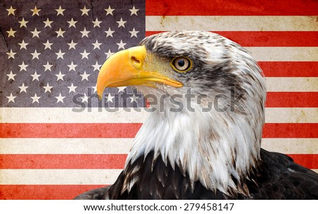North American bald eagle on American flag  - stock photo