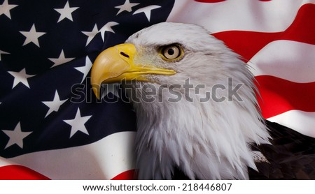 North American bald eagle on American flag background - stock photo