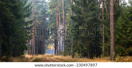 North Poland forests. Autumn time with light fog.Pomerania (Pomorze) province/Autumn Forest Panorama - stock photo