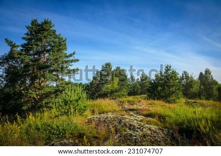north summer: forest on the stones - stock photo