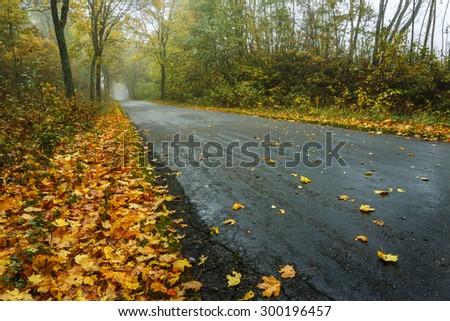 Northern Poland./ Autumn road. - stock photo