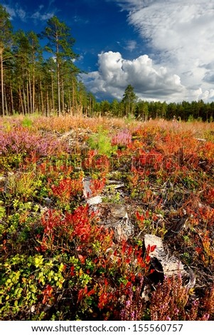 Northren forest with colorful foreground - stock photo