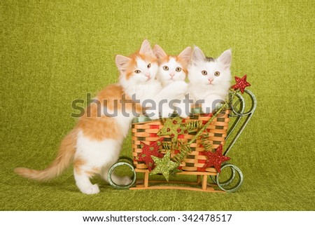 Norwegian Forest Cat kittens sitting inside miniature bamboo Christmas XMas sleigh decorated with glitter ornaments on green background  - stock photo