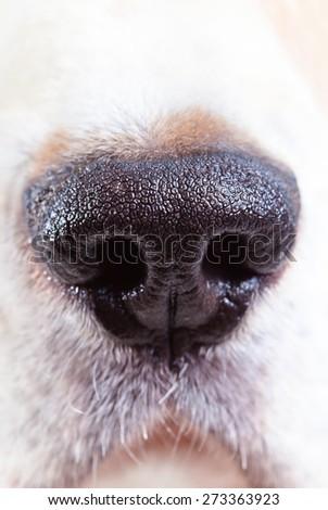 nose of a dog , macro shot , focus on center - stock photo