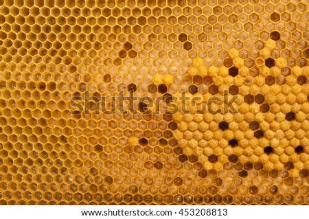 Not capped brood cells of the honey bee - stock photo