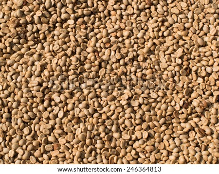 Not fried grains of raw coffee closeup - stock photo
