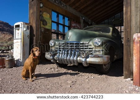 November 9, 2015 Nelson, Nevada: tourist dog posing in the front of a vintage car parked in an old building in the abandoned mining town  - stock photo