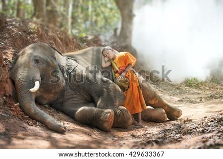 Novice lollop on baby elephant - stock photo