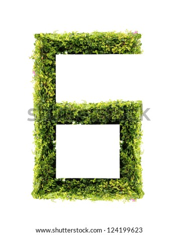 Number6 green leaves on white background - stock photo