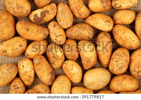 number of raw baby potatoes on burlap sack - stock photo