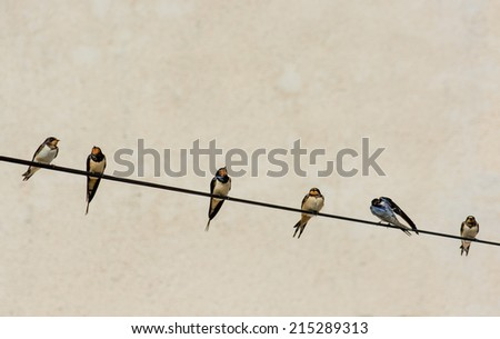 Numerous Swallows Sitting on Wire - stock photo