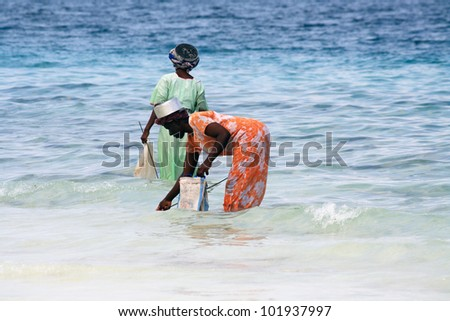 NUNGWI, ZANZIBAR - OCTOBER 18: Women with colorful clothes look up for shellfishes at low tide on October 18, 2010 in Nungwi, Zanzibar, Tanzania. - stock photo