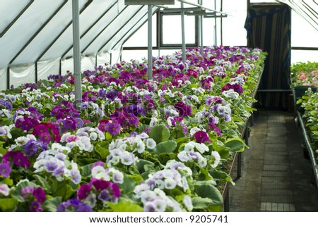 nursery-garden - stock photo