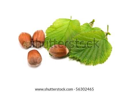 nuts and leaves isolated on white - stock photo