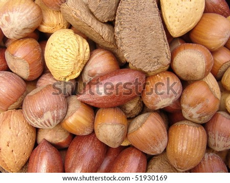 Nuts in shells 2 - stock photo