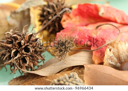 Nuts, leave and seed - stock photo
