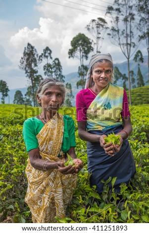 NUWARA ELIYA, SRI LANKA - February, 9, 2016: Tea pickers in tea plantation of Nuwara Eliya, Sri Lanka - stock photo