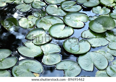 Nymphaea - stock photo