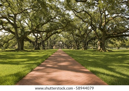 Oak Alley Plantation, with the oak tree path - stock photo