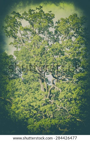 Oak during summer in retro style, filters applied - stock photo
