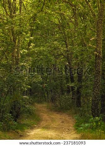oak forest road - stock photo