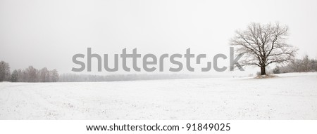 Oak growing in the field in a winter season. The photo is made of several photos - stock photo