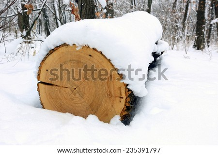 oak log under snow in forest - stock photo