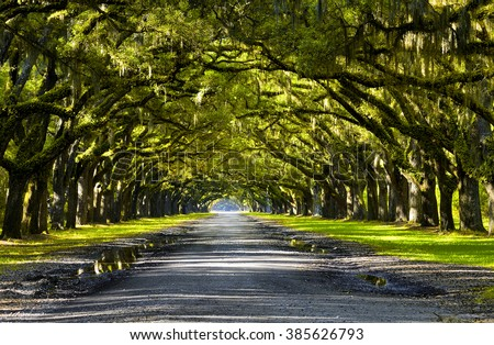Oak road in plantation,Georgia,USA - stock photo