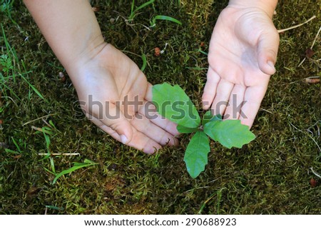 oak sprout in a lawn surrounded by caucasian children hands  - stock photo