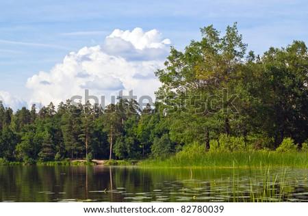 oak tree near water - stock photo