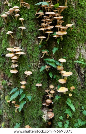 Oak tree with Common Polypody fern and fungi - stock photo