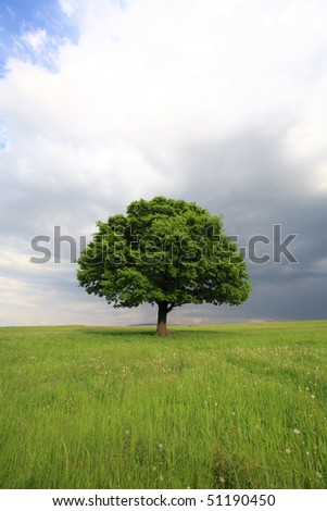 Oak tree with new leaf growth in early spring standing alone in a field, dog standing next to it on a cloudy sky with copy space - stock photo