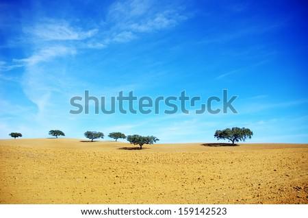 Oak trees in dry field, Alentejo, Portugal - stock photo