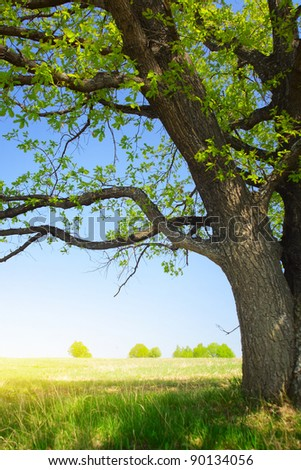 Oak with fresh green leaves on a bright spring meadow - stock photo