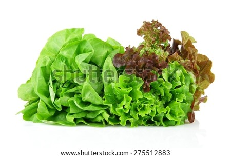 Oakleaf lettuce, corrugated lettuce isolated on white background  - stock photo