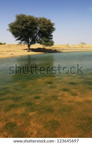 Oasis in the Desert - stock photo