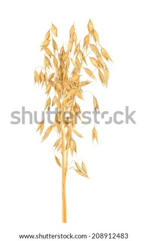 oat cereal grain isolated on white background  - stock photo