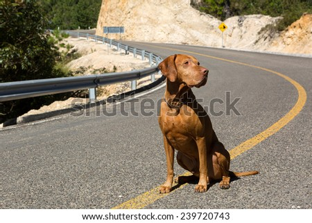 obedient sitting dog on curvy road - stock photo
