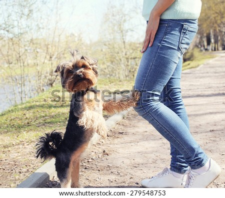 Obedient yorkshire terrier dog with owner in the park - stock photo